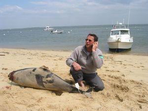 Que faire en cas d'échouage de mammifères marins