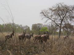 Ecotourisme au benin - parc national de Pendjari