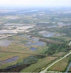 Marais du Vigueirat en camargues