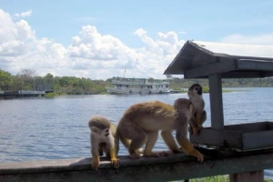 Voyage nature avec Escursia sur le Rio Negro