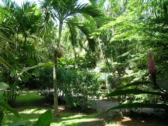 Le jardin de Gwo Caillou