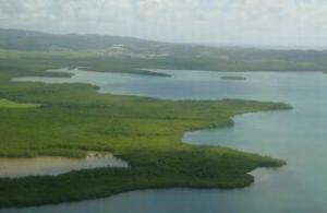 Photo de mangroves