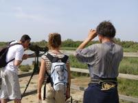 Observations dans les marais du Vigueirat