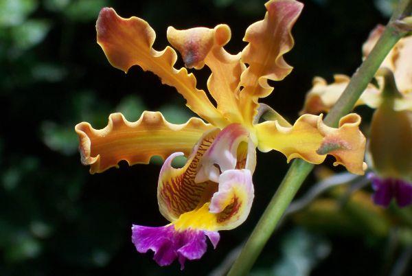 Les Orchidées du Parc