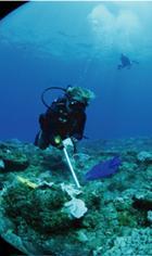 Surveillances des récifs