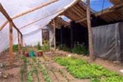 La construction de serres agricoles, de bergeries et de poulaillers solaires rend possible la production de légumes, de poulets et d'oeufs pendant les saisons froides, et permettent de réduire la mortalité du bétail et de la volaille pendant l'hiver. (Source CO2 Solidaires)