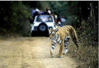 tourisme pour les tigres