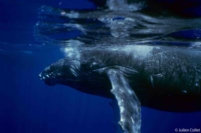 échouage de mammifères marins