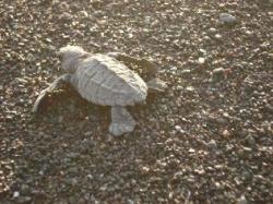 protection des tortues marines avec Tropical Adventures