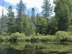 Wilderness - nature vierge de toute présence humaine