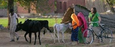 wwoofing en Inde