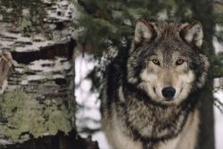 Protection des espèces menacées