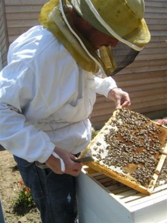 Activité zero carbone  - decouverte des abeilles bio-indicateurs
