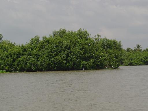 Observation des oiseaux au Benin