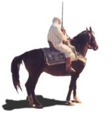 IOM VOYAGES, un tour opérateur de la région Orient au Maroc.