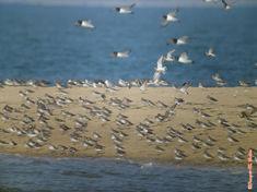 oiseaux et pieds marins