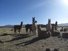 argentine authentique avec Tierras argentinas