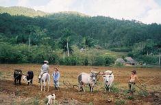 trekking Cuba