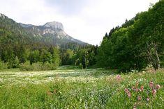 massif de Chartreuse - Isère