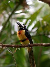 Costa Rica Découverte - ecotourisme au costa Rica