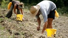 amanins, agro-ecologie et coopération