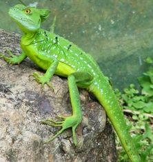 Biodiversité du Costa Rica - © Costa Rica découverte