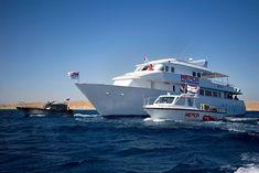 Dauphins de la Mer Rouge : rejoignez l'équipe de recherche !