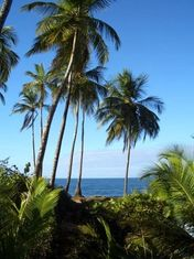 Plage au costa rica- gandoca manzanillo © Terra Caribea
