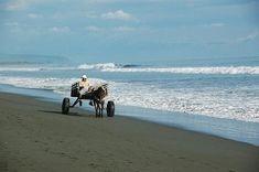 Péninsule d'Osa – © Terra Caribea