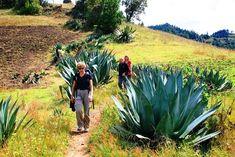 Trekking dans la sierra norte - © Terra Maya