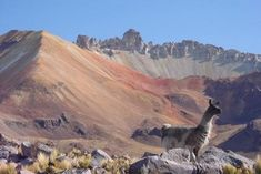 climat bolivie