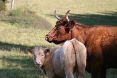 Domaine du Mons - ferme biologique et durable en correze