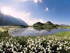 Tourisme Hautes-Alpes - Nature et Biodiversité