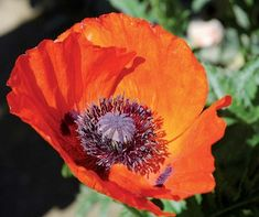 Jardins botaniques, Sources et balnéothérapie