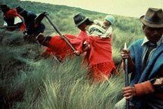 Paysans andins - communautés indigènes avec Terra Ecuador