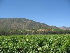 Le Chili : une terre vinicole de renom