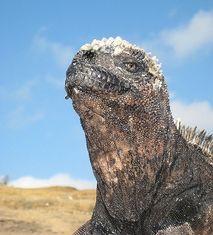 Sejour sur les îles Galapagos