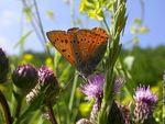 Trame écologique : préserver la biodiversité dans les Parcs naturels du Massif central