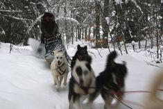Nicolas Vanier - chiens de traineaux