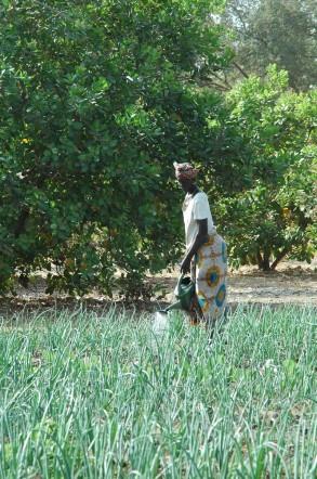 Jardin de femmes au Sénégal