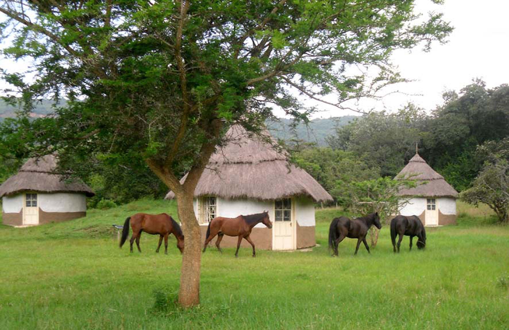 EcoCamp de Wild Route of Kenya