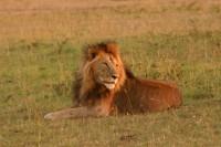 Safari avec WRK