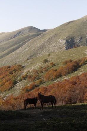 Chevaux sauvages dans les Abruzzes