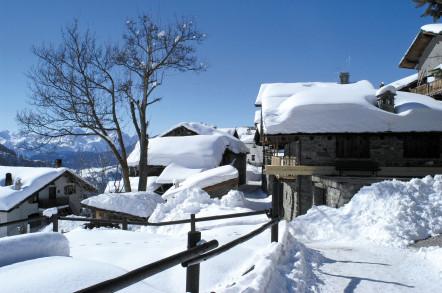 Chamois - Photo : Alpine Pearls