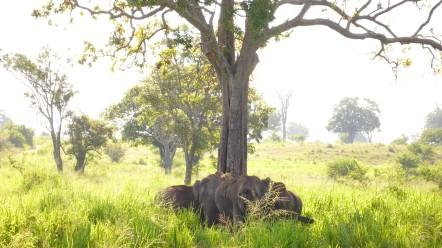 Eléphants - Parc National de Uda Walawe @Jeff Petry