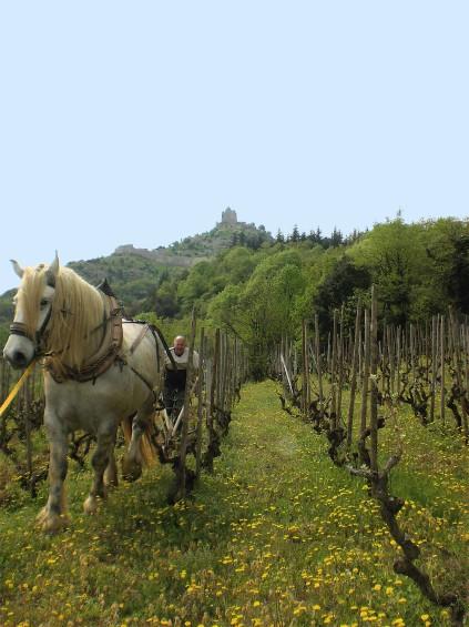 entretien des vignes © OT Rhône Crussol