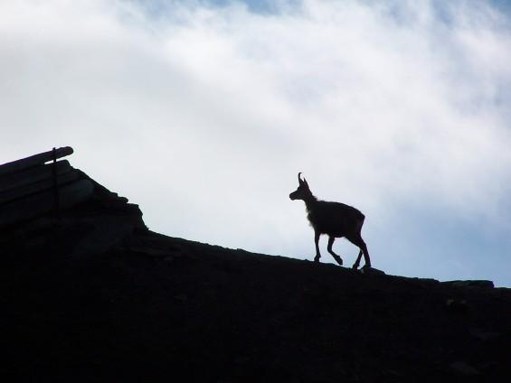 la Nature à l'état pur et une faune sauvage unique (crédit Pierre Dutertre)