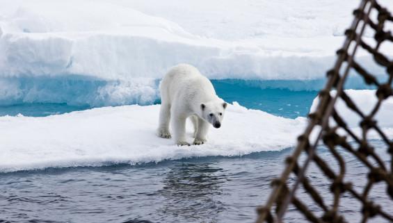 « … et les ours, tels que vous les verrez depuis le bateau »