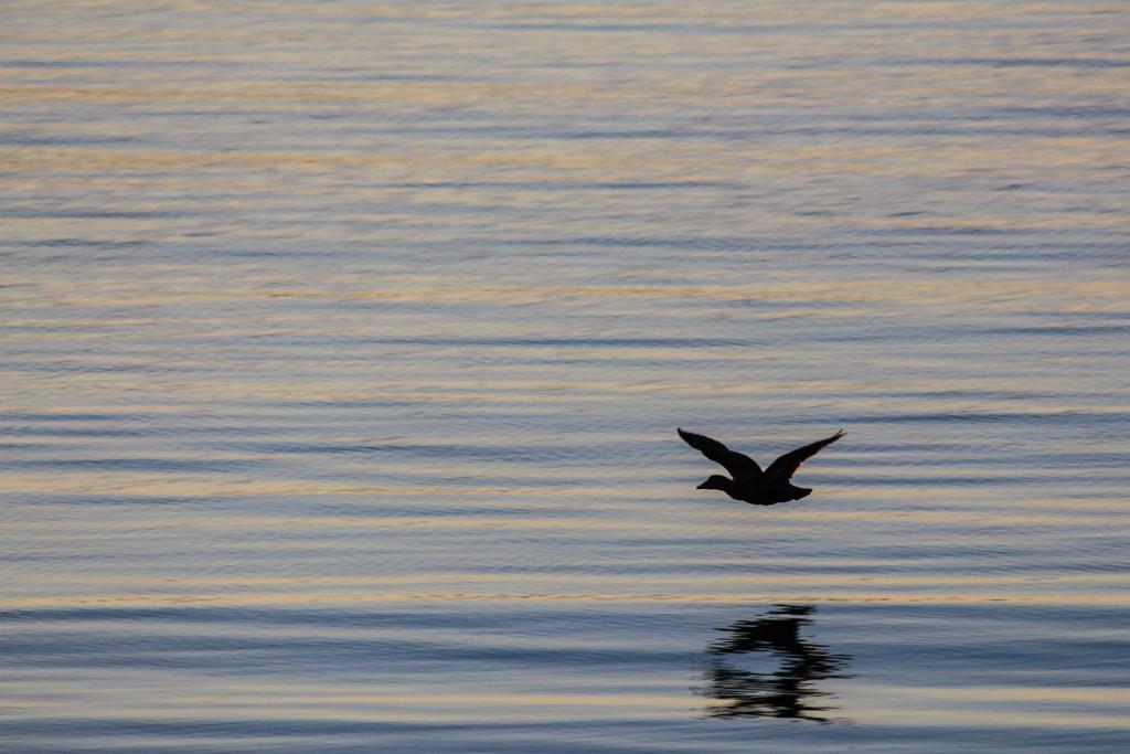 Les fjords de l'ouest - © Sébastien Repéto-11