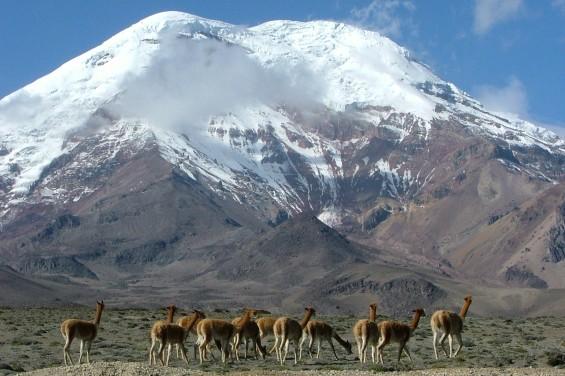 ANDES-Chimborazo & vigognes